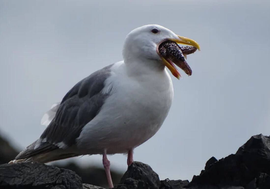 Man punches seagull for trying to steal his prawns