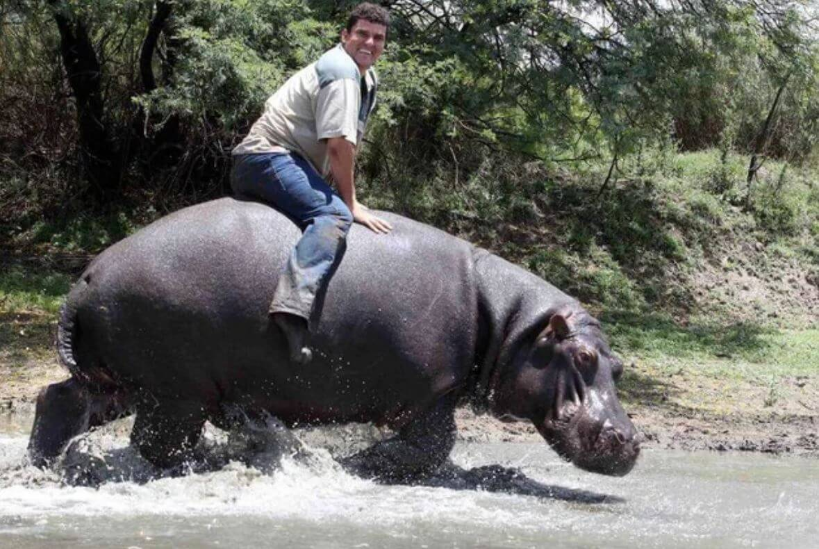 Who is Marius Els? South African Farmer killed by pet hippo Humphrey